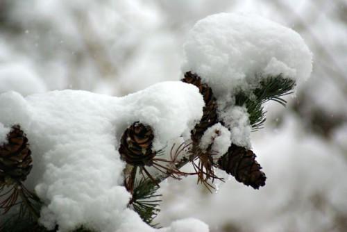 Wintereinbruch ist gekommen